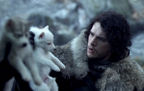 Инуит-собака-Описание-особенности-содержание-и-цена-породы-инуит-17