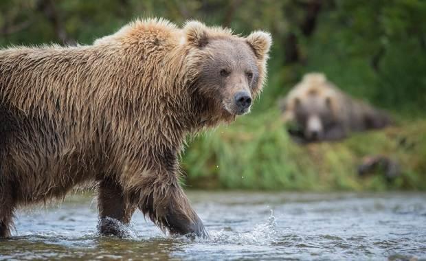 Виды-медведей-Описание-названия-и-особенности-медведей-16