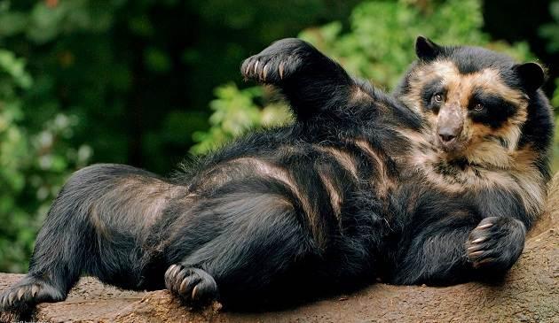 Виды-медведей-Описание-названия-и-особенности-медведей-22