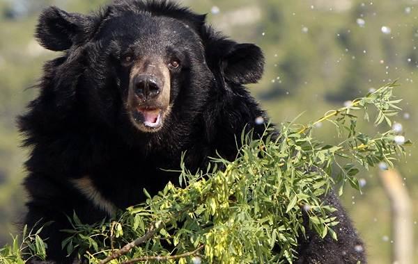 Виды-медведей-Описание-названия-и-особенности-медведей-27