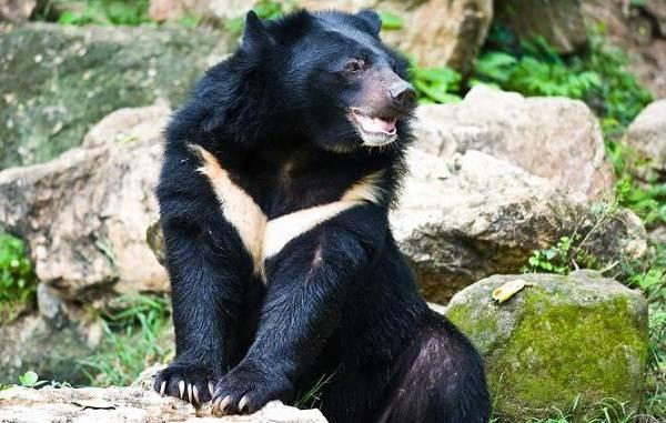 Виды-медведей-Описание-названия-и-особенности-медведей-28