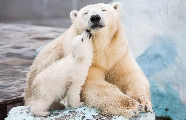 Виды-медведей-Описание-названия-и-особенности-медведей-5