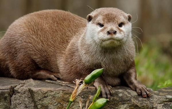 Выдра-животное-Описание-особенности-виды-образ-жизни-и-среда-обитания-выдры-11