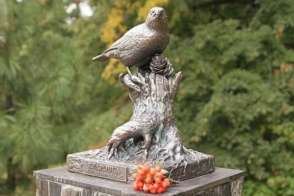 Кедровка-птица-Описание-особенности-виды-образ-жизни-и-среда-обитания-кедровки-13