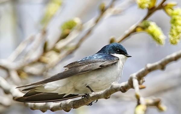 Перелётные-птицы-Описания-виды-и-названия-перелётных-птиц-28