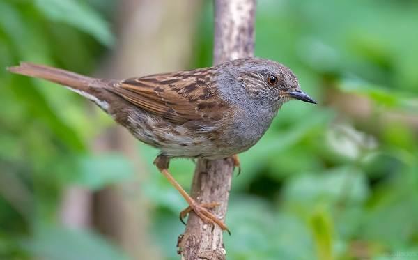Перелётные-птицы-Описания-виды-и-названия-перелётных-птиц-30
