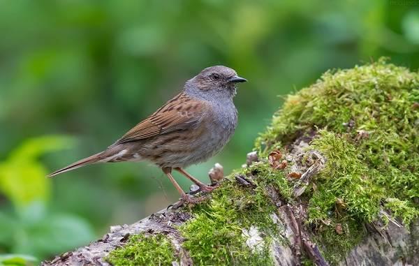 Перелётные-птицы-Описания-виды-и-названия-перелётных-птиц-31