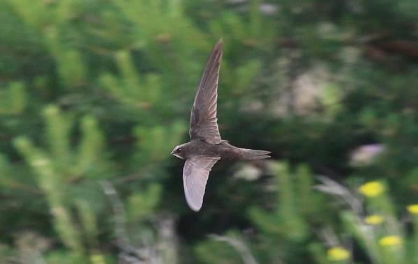Перелётные-птицы-Описания-виды-и-названия-перелётных-птиц-32