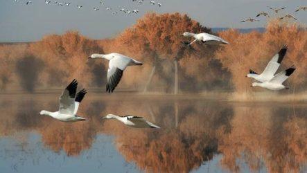 Перелётные птицы. Описания, виды, и названия перелётных птиц