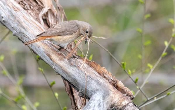 Перелётные-птицы-Описания-виды-и-названия-перелётных-птиц-48