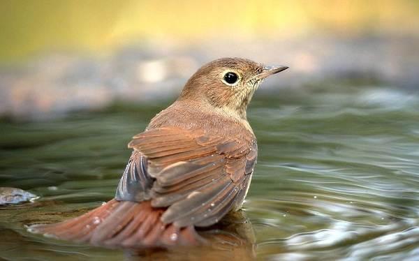 Перелётные-птицы-Описания-виды-и-названия-перелётных-птиц-50