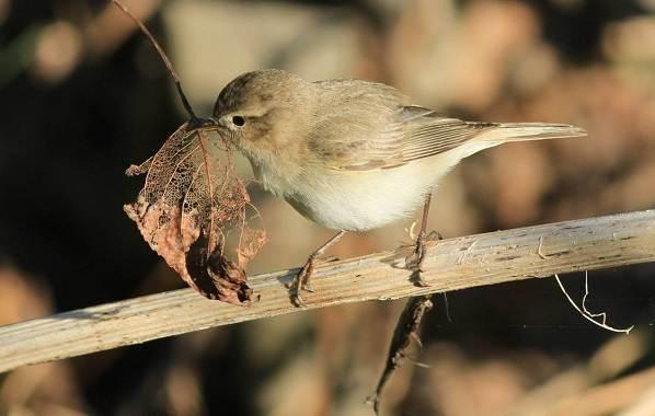 Перелётные-птицы-Описания-виды-и-названия-перелётных-птиц-51