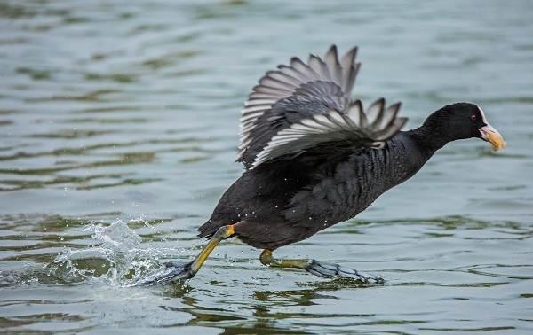 Перелётные-птицы-Описания-виды-и-названия-перелётных-птиц-56