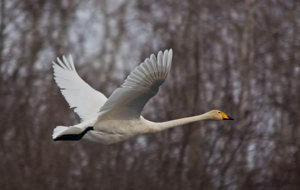 Перелётные-птицы-Описания-виды-и-названия-перелётных-птиц-6