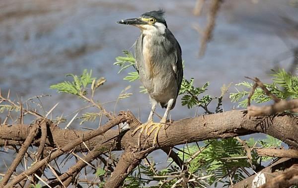 Птицы-болот-Описание-особенности-и-названия-птиц-живущих-на-болоте-10