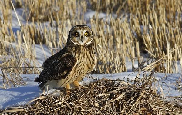 Птицы-болот-Описание-особенности-и-названия-птиц-живущих-на-болоте-18