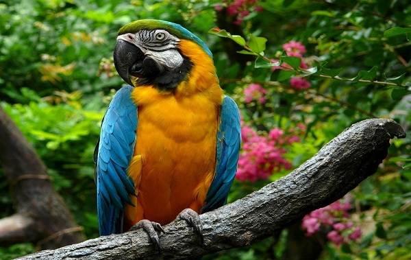 Птицы-болот-Описание-особенности-и-названия-птиц-живущих-на-болоте-22