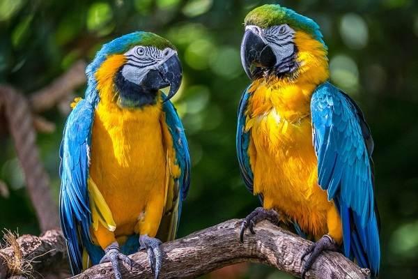 Птицы-болот-Описание-особенности-и-названия-птиц-живущих-на-болоте-23