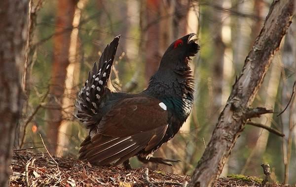 Птицы-болот-Описание-особенности-и-названия-птиц-живущих-на-болоте-24