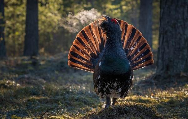 Птицы-болот-Описание-особенности-и-названия-птиц-живущих-на-болоте-25