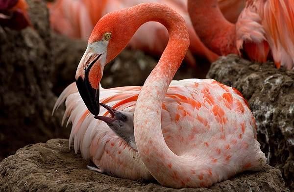 Птицы-болот-Описание-особенности-и-названия-птиц-живущих-на-болоте-29