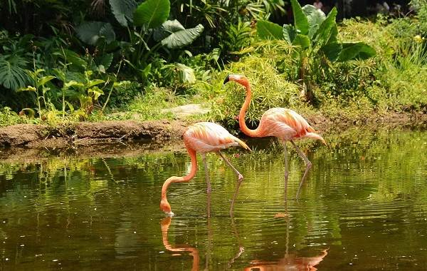 Птицы-болот-Описание-особенности-и-названия-птиц-живущих-на-болоте-30