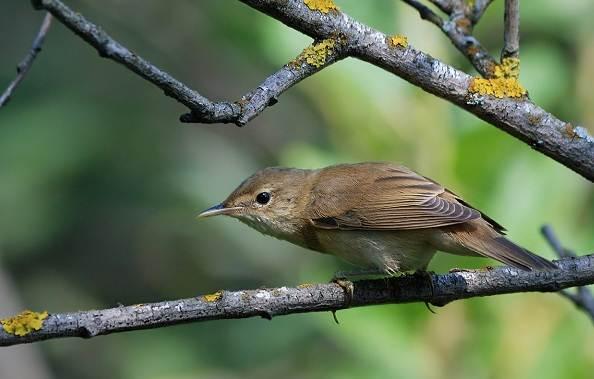 Птицы-болот-Описание-особенности-и-названия-птиц-живущих-на-болоте-34