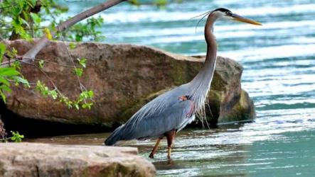Птицы болот. Описание, особенности и названия птиц живущих на болоте