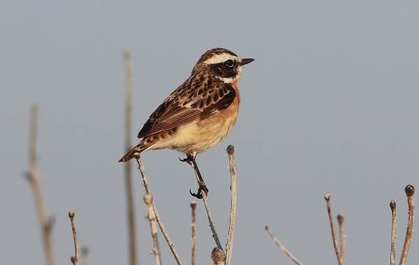 Птицы-болот-Описание-особенности-и-названия-птиц-живущих-на-болоте-45