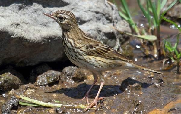Птицы-болот-Описание-особенности-и-названия-птиц-живущих-на-болоте-46