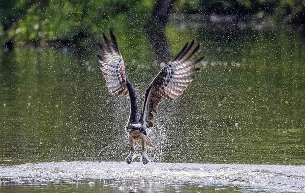 Птицы-болот-Описание-особенности-и-названия-птиц-живущих-на-болоте-49