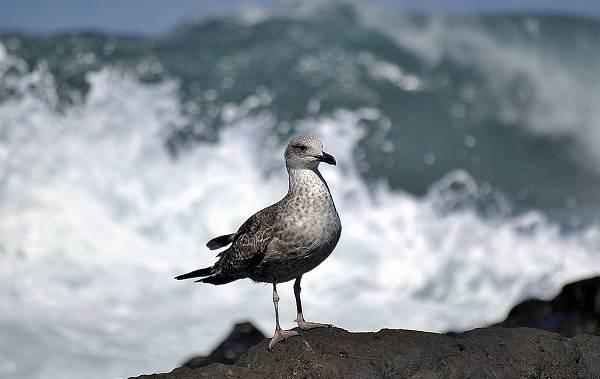 Птицы-болот-Описание-особенности-и-названия-птиц-живущих-на-болоте-50