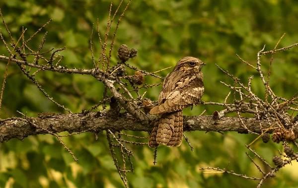 Птицы-болот-Описание-особенности-и-названия-птиц-живущих-на-болоте-52