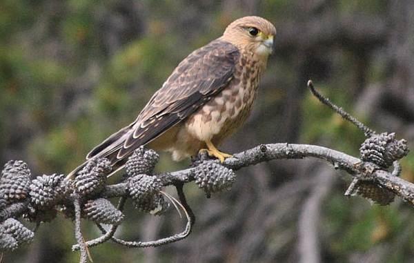 Птицы-болот-Описание-особенности-и-названия-птиц-живущих-на-болоте-53
