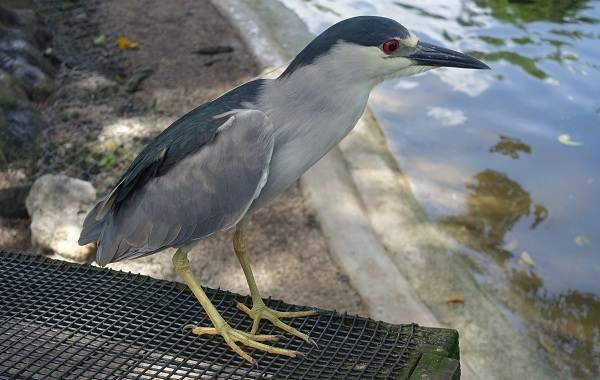 Птицы-болот-Описание-особенности-и-названия-птиц-живущих-на-болоте-9
