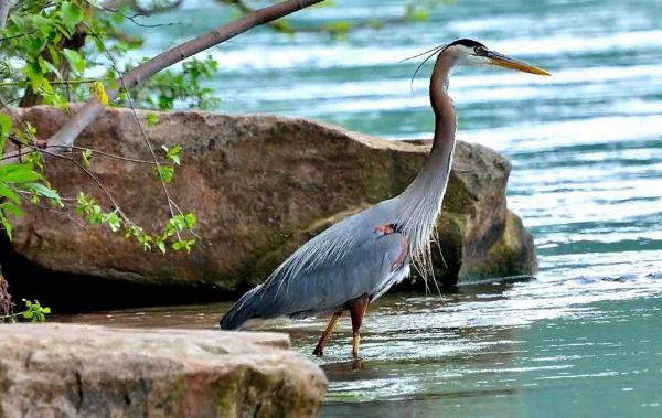 Птицы-болот-Описание-особенности-и-названия-птиц-живущих-на-болоте