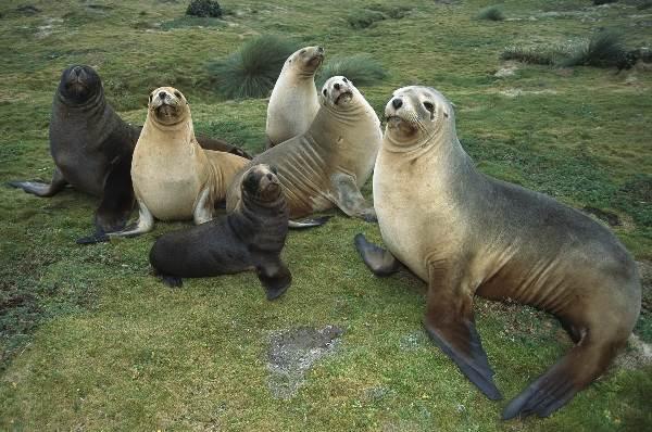 Тюлень-животное-Описание-особенности-виды-образ-жизни-и-среда-обитания-тюленя-2