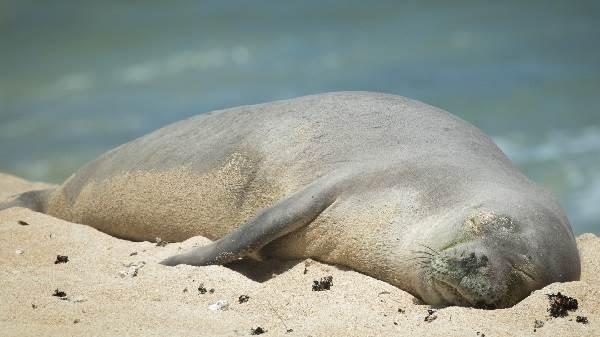 Тюлень-животное-Описание-особенности-виды-образ-жизни-и-среда-обитания-тюленя-4