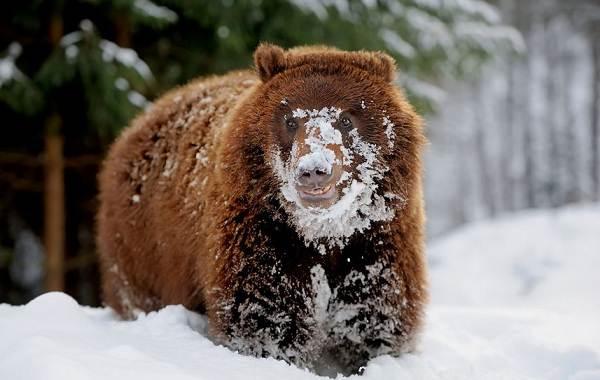 Животные-Алтайского-края-Описание-названия-и-виды-животных-Алтайского-края-10