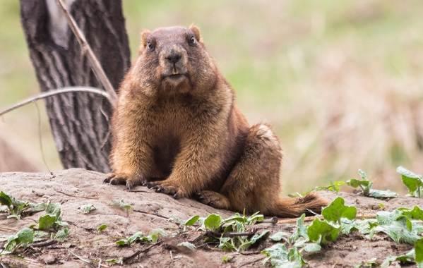 Животные-Алтайского-края-Описание-названия-и-виды-животных-Алтайского-края-30