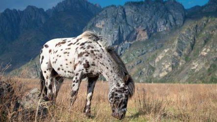 Животные Алтайского края. Описание, названия и виды животных Алтайского края