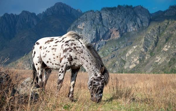 Животные-Алтайского-края-Описание-названия-и-виды-животных-Алтайского-края-4