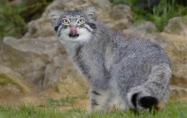 Животные-Алтайского-края-Описание-названия-и-виды-животных-Алтайского-края-40