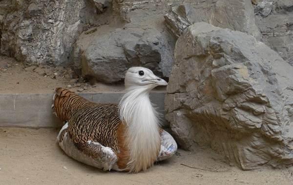 Животные-Алтайского-края-Описание-названия-и-виды-животных-Алтайского-края-48