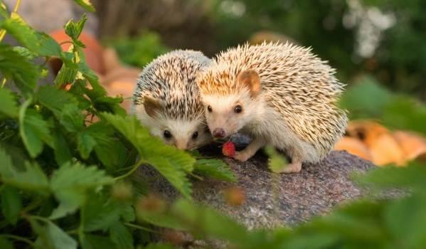Животные-Алтайского-края-Описание-названия-и-виды-животных-Алтайского-края-5