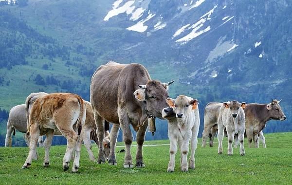 Животные-Алтайского-края-Описание-названия-и-виды-животных-Алтайского-края-80