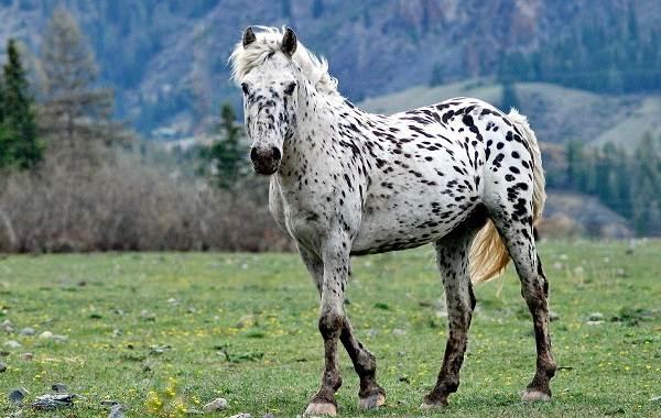 Животные-Алтайского-края-Описание-названия-и-виды-животных-Алтайского-края-82