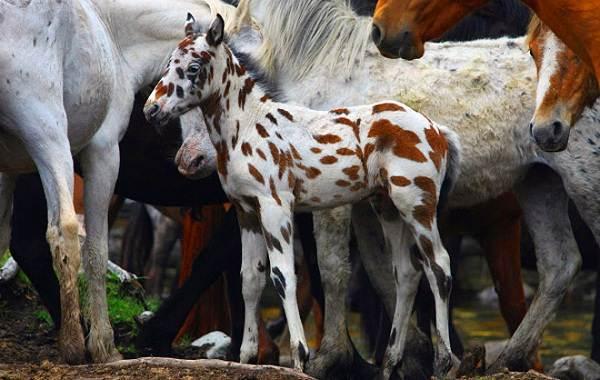 Животные-Алтайского-края-Описание-названия-и-виды-животных-Алтайского-края-83