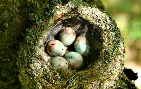 Поползень-птица-Описание-особенности-виды-образ-жизни-и-среда-обитания-поползня-19