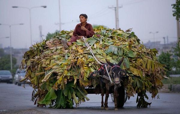 Осёл-животное-Описание-особенности-образ-жизни-и-среда-обитания-осла-19